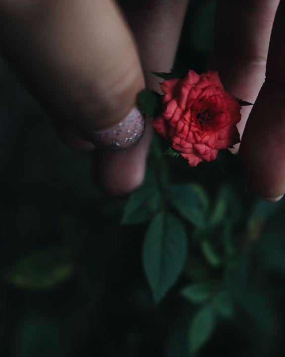 Rose -  Shreejanaczurai