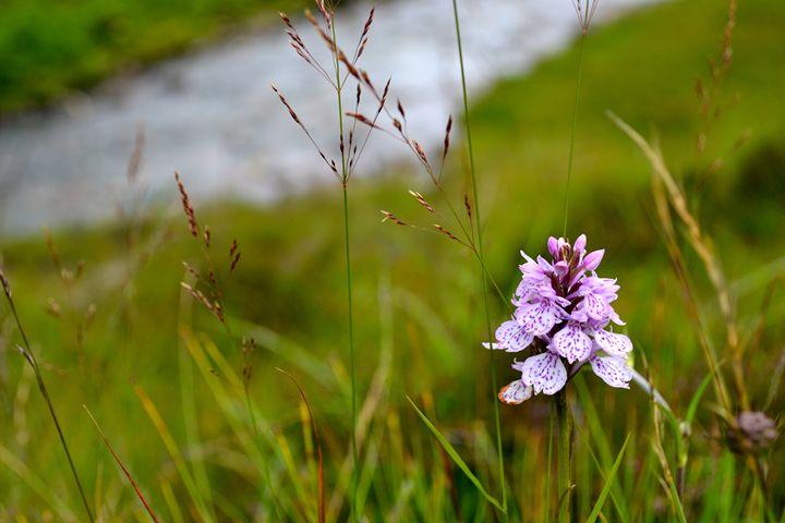 lone flower - Danielle Stilwell