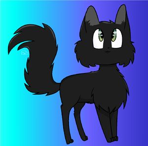 Neo the Cat