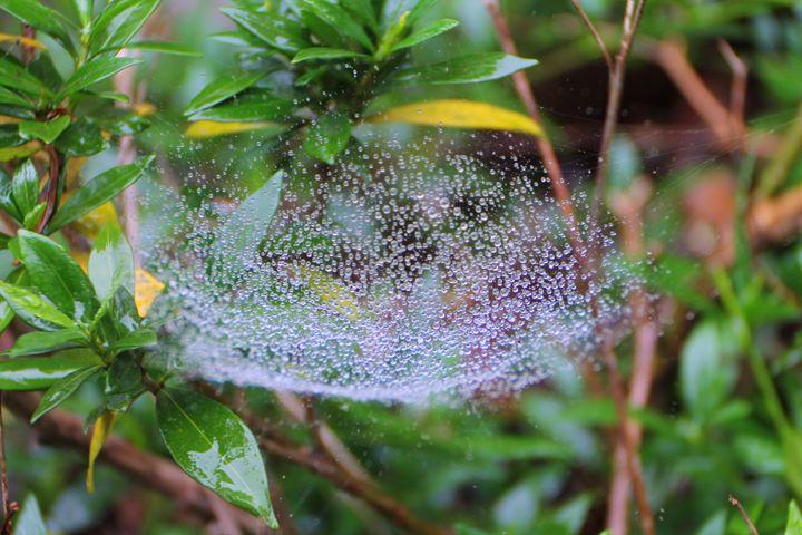 Good Morning Web 1 - Harvey Speller