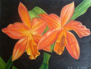 Orchids - Volkov Art