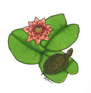 Turtle on lily pad
