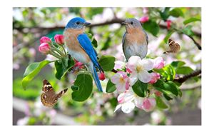BLUEBIRDS AND BUTTERFLIES