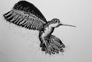 Hummingbird - E G Creations