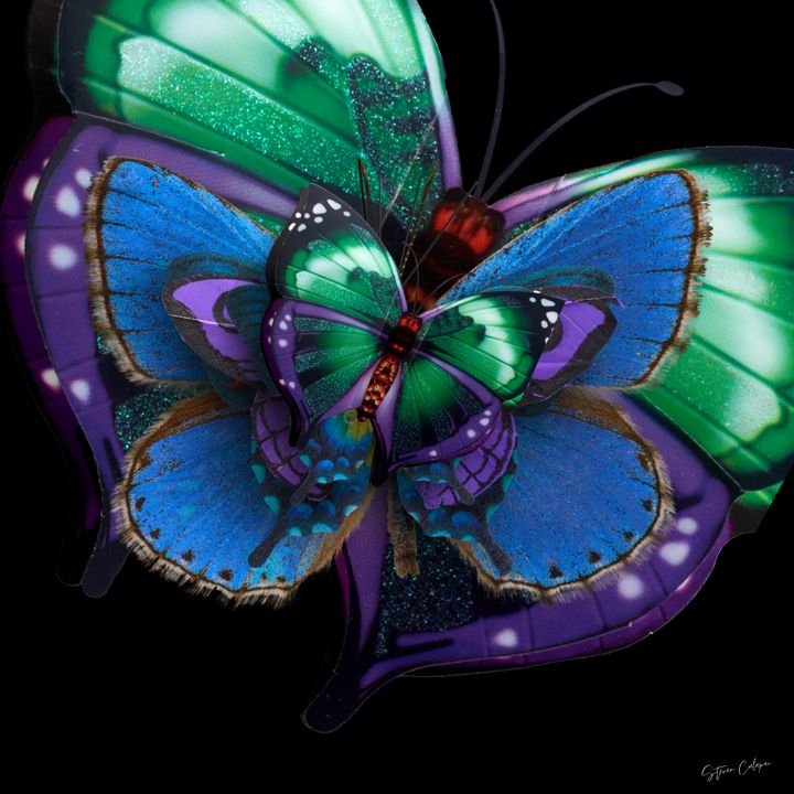 The Butterfly Dimension - Steven Calapai Published Artist