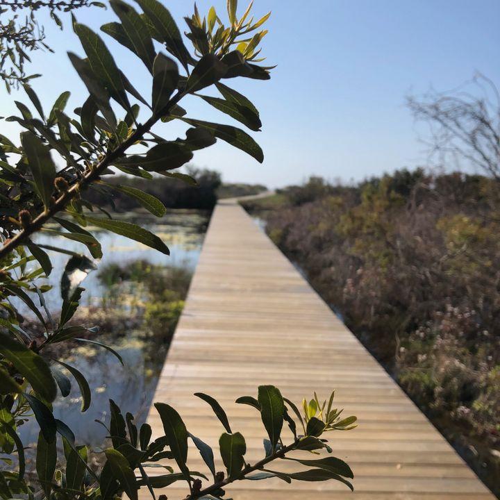 Boardwalk to the Beach - Sheryl Sabol - Through My Eyes