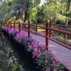 Pretty Pinks and a Bridge