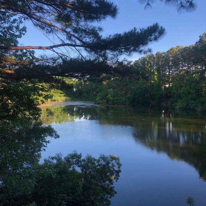 Peaceful Pond 1 - Sheryl Sabol - Through My Eyes