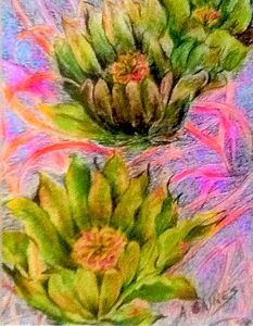 Double cactus flower, pastel drawing