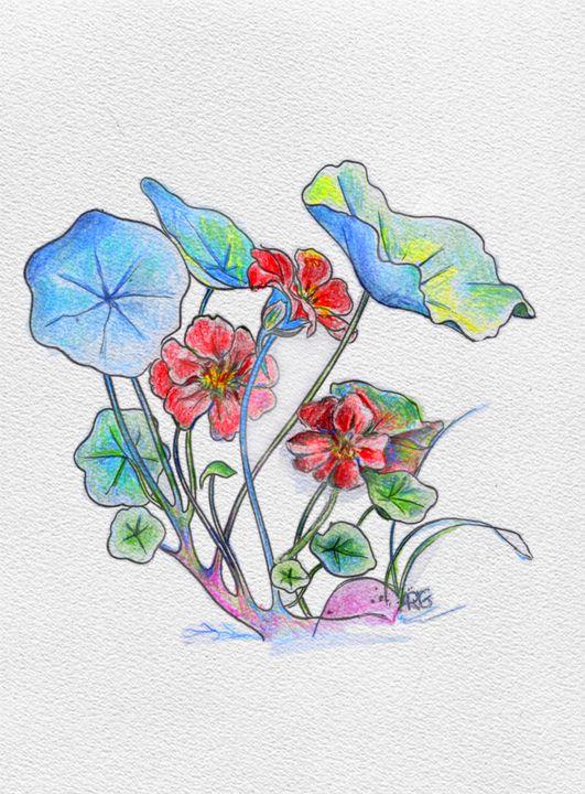 Nasturtium watercolor - Shining Light Gallery