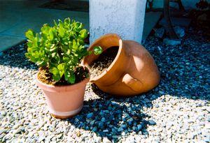 Arizona Terra cotta and plant