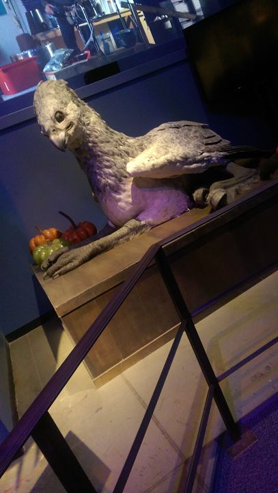 Harry Potter hippogriff - Katelynn johnson