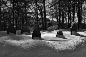 Snowy Graves I