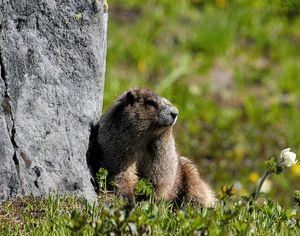 Marmot 04