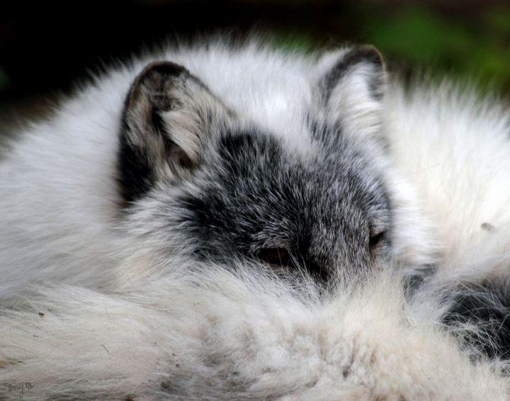 Arctic Fox 02 - Amy's Busy Bee Arts