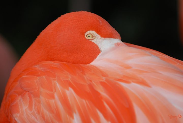 Flamingo 01 - Amy's Busy Bee Arts