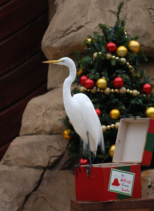 Egret Christmas Gift - Amy's Busy Bee Arts