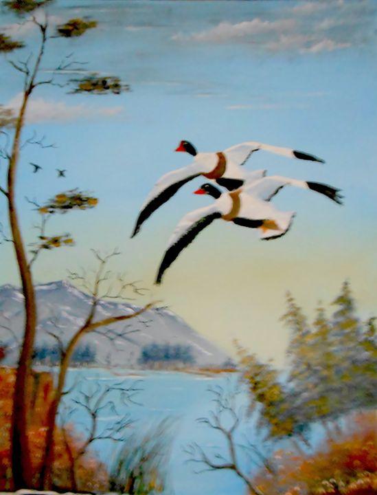 Common Sheld Ducks - Fine Art by Al Johannessen