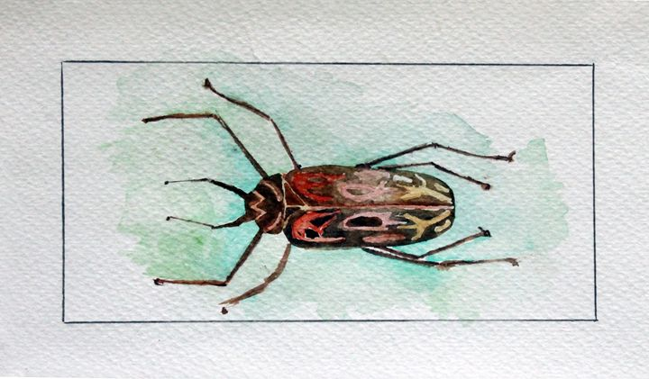 INSECTO - WATERCOLOURS