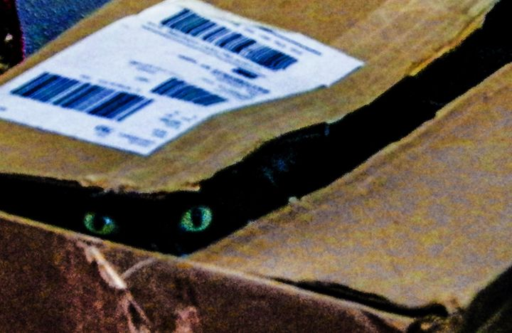 I see you! - Dawn Siegler