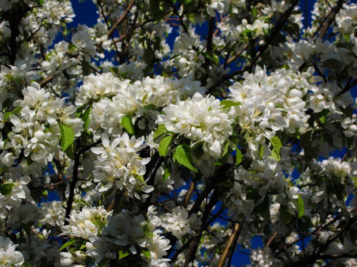 Floral Skies 2 - Dawn Siegler