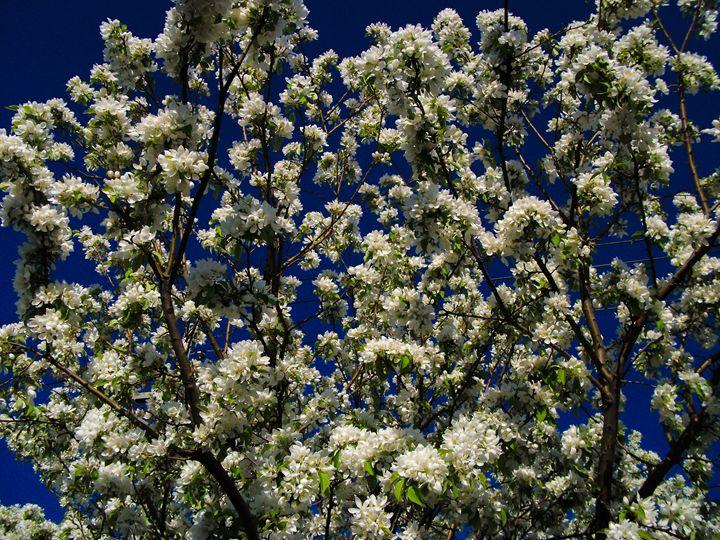 Floral Skies - Dawn Siegler