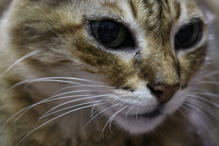 Meow -  Tand1989