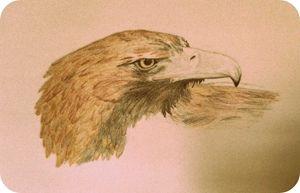 Eagle browned - Wyverntales