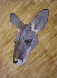 'Blue' Doe red kangaroo