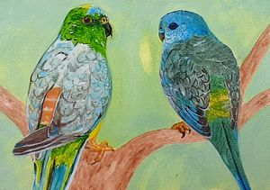 Red rumped parrot pair