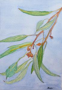 Gum Leaves Watercolour