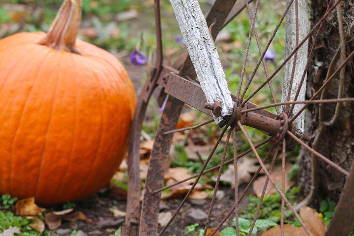 Rustic Autumn - Amanda Pawlicki