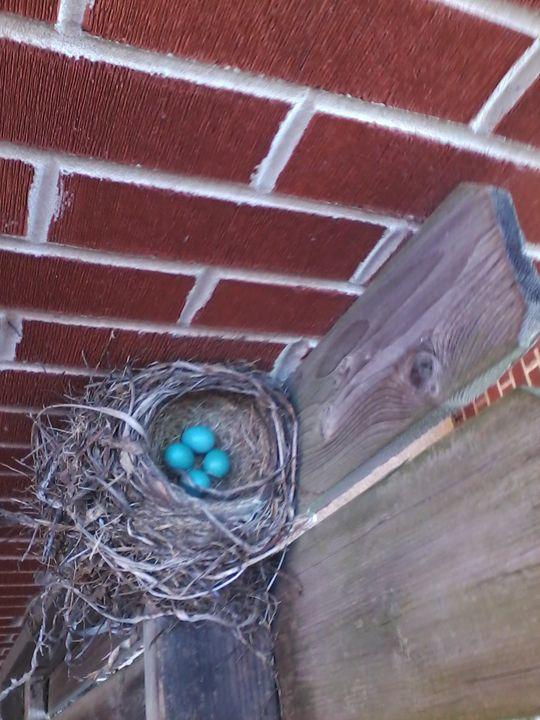 Robin's Eggs 3 - Pennie Dae