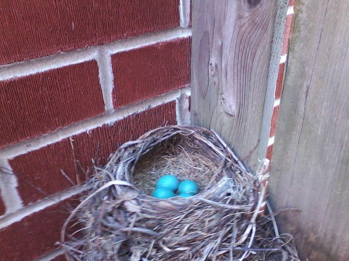 Robin's Eggs 2 - Pennie Dae