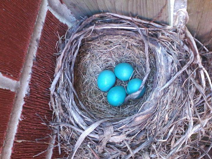 Robin's Eggs 1 - Pennie Dae