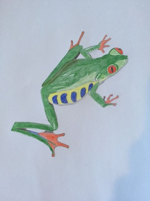 Red-Eyed Tree Frog - Heavenly Talents
