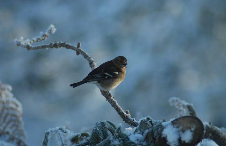 Living in Winter - John Coyle