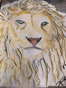 Lions sight