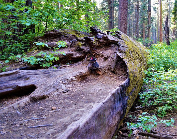 Fallen Step - olivetree
