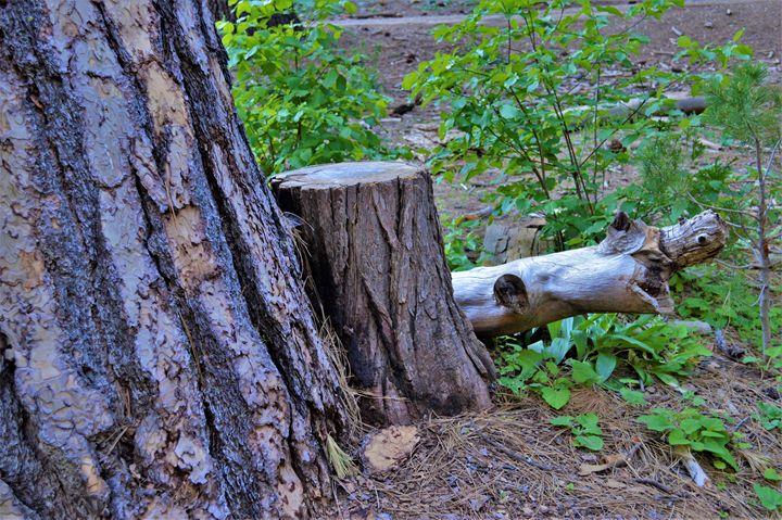 Textures in Big Tree - olivetree