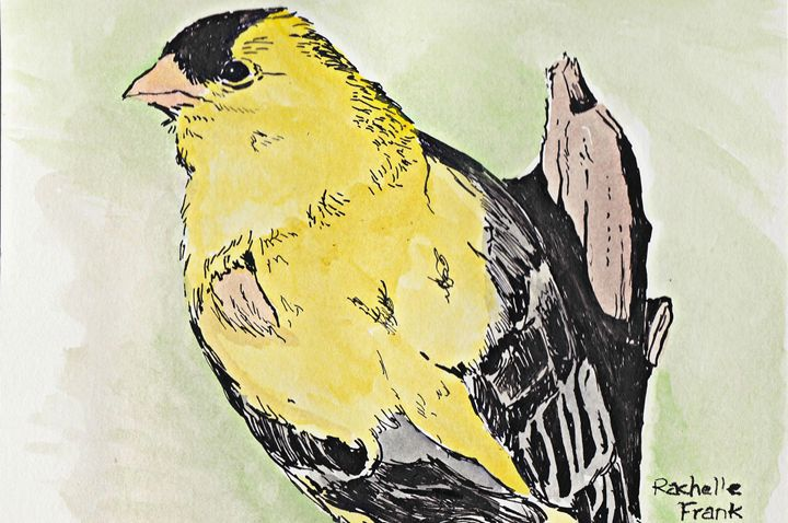 Yellow Bird - Frank Family Art