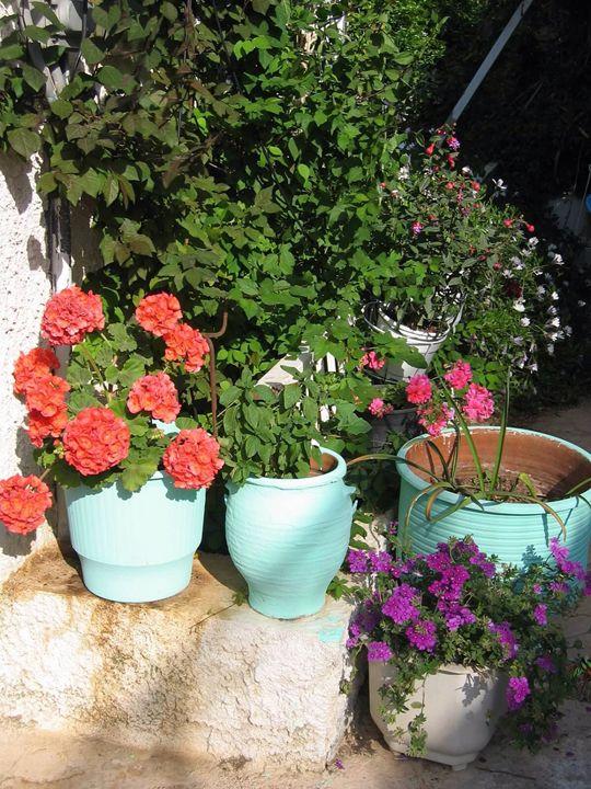 Greek geranium - Eleni Luna