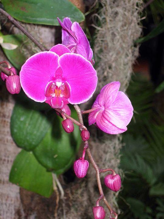 Purple orchid - Eleni Luna