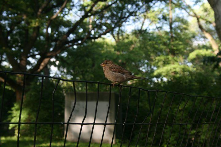 Bird on fence - Eleni Luna