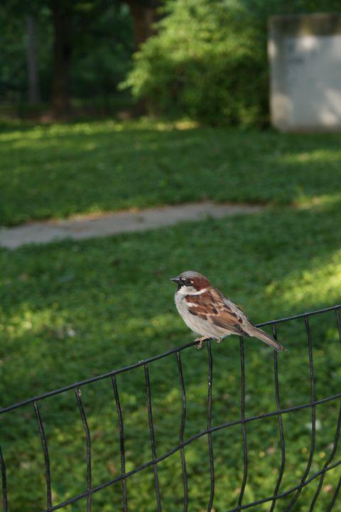 Birdie - Eleni Luna