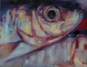 Sardines - detail study