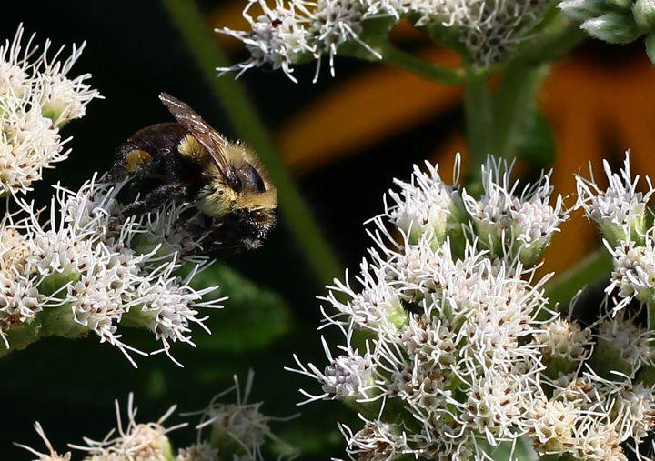 Bee Upclose - BTrerice