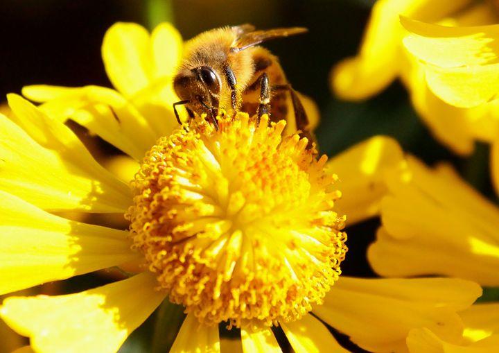 Sunny Day Bee - BTrerice