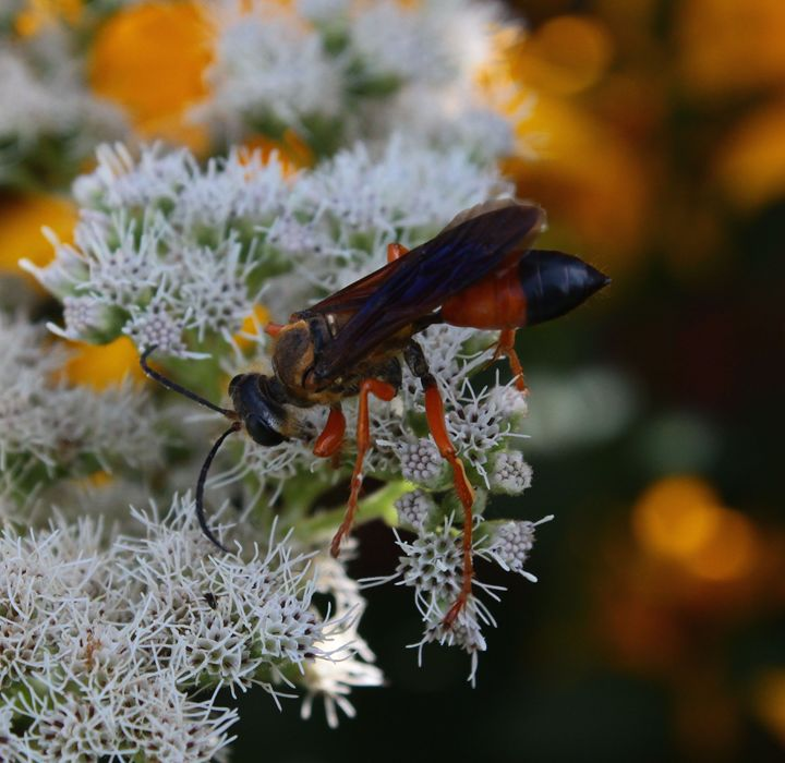 Wasp - BTrerice