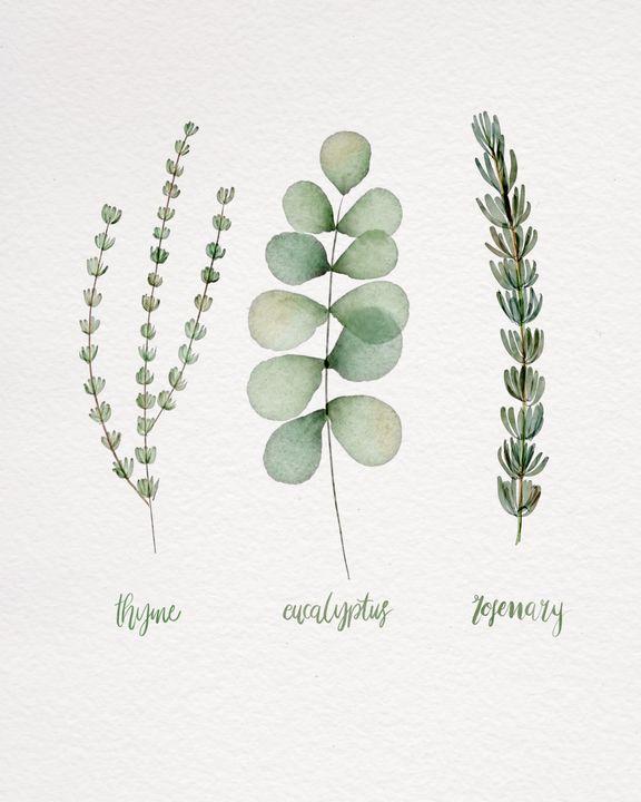 Herbs - Sandijoart